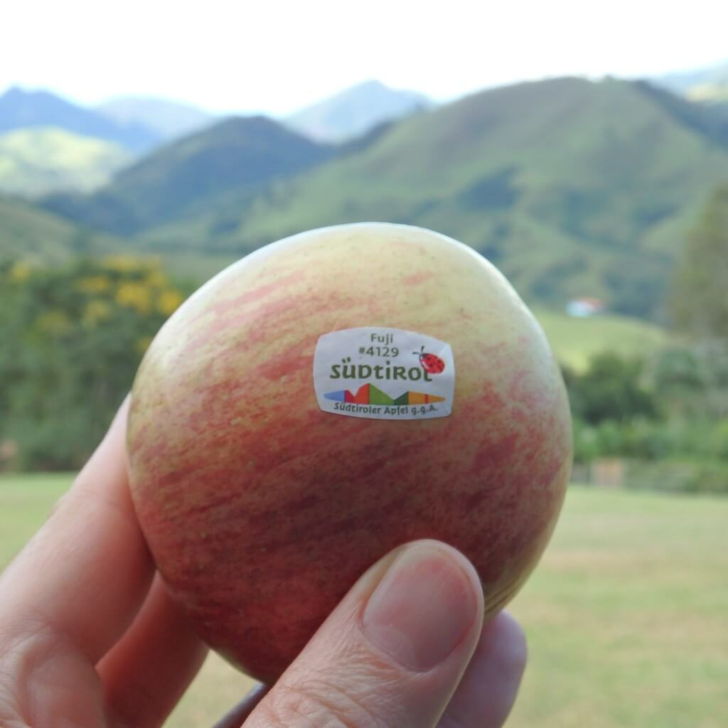 Apple from South Tyrol in Brazil